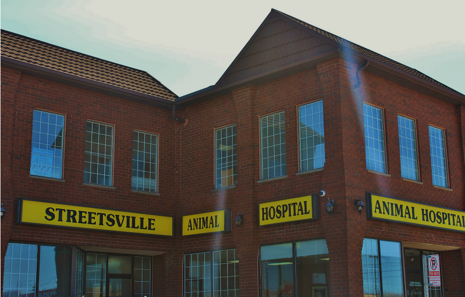 Exterior of building with sign of Streetsville Animal Hospital Veterinary Services in Mississauga, ON